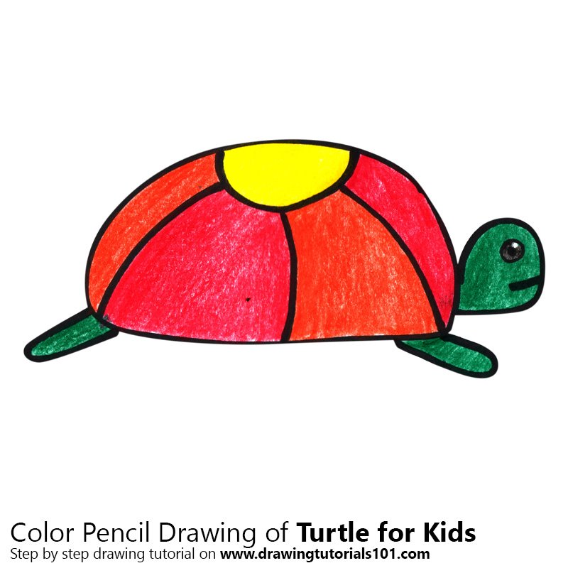 Turtle for Kids Color Pencil Drawing