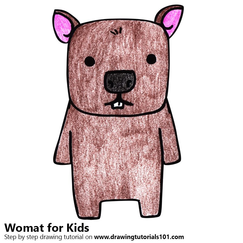 Wombat for Kids Color Pencil Drawing