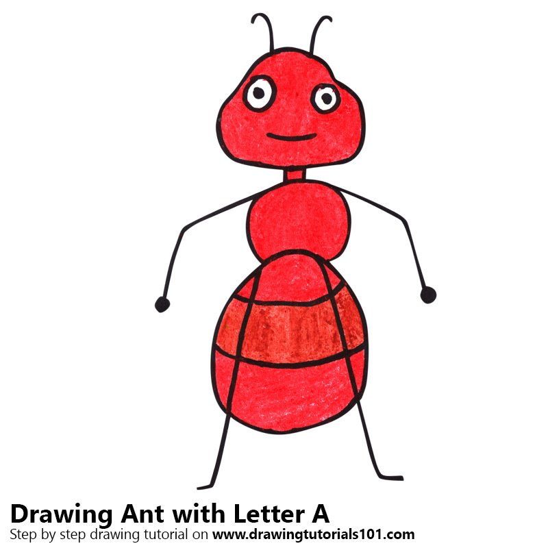 learn how to draw an ant from letter a animals with letters step