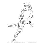 How to Draw a Cartoon Parakeet