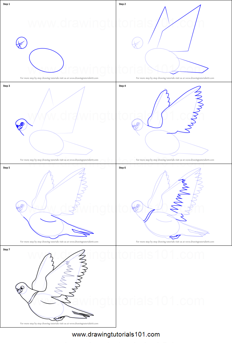 How To Draw Pigeon In Flight Printable Step By Step Drawing Sheet