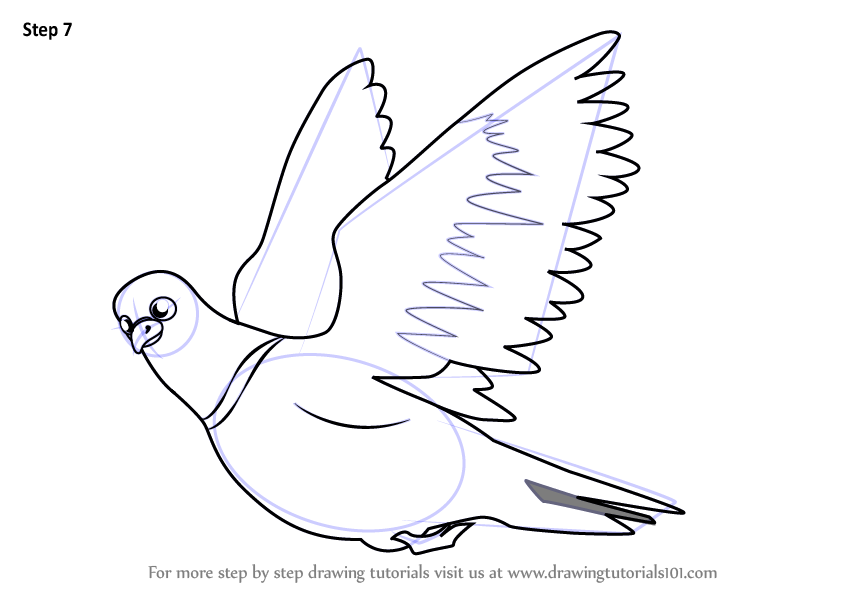 Learn How To Draw Pigeon In Flight Birds For Kids Step By Step