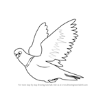 How to Draw Pigeon in Flight