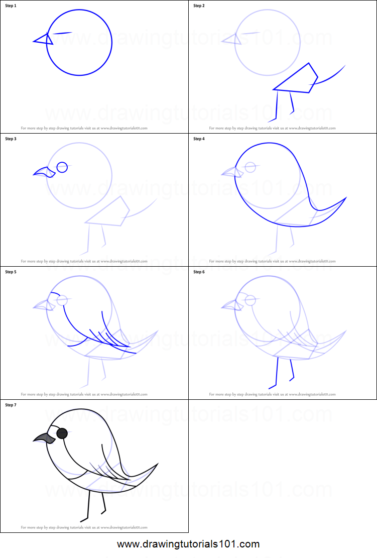 How to Draw Robin Bird for Kids printable step by step ...