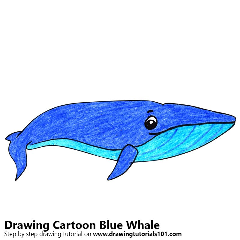 how to draw a whale step by step youtube