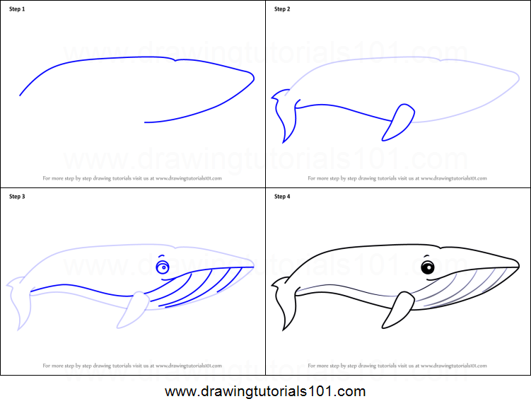 Blue Whale Diagram Drawing - Wiring Circuit •