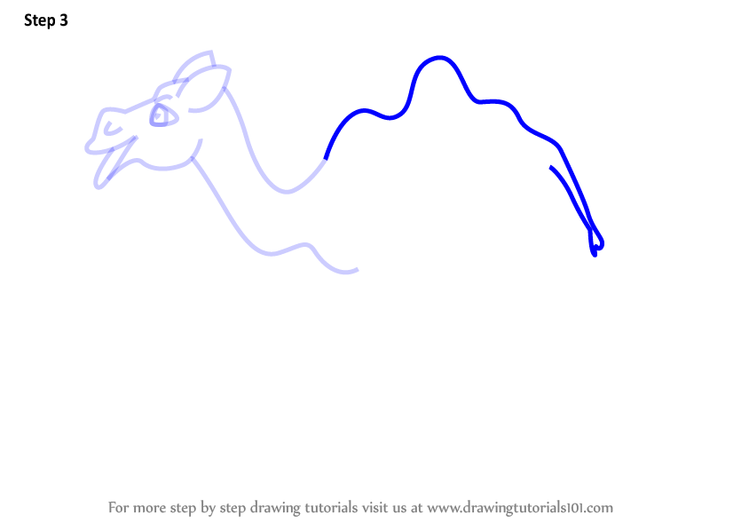 Learn How to Draw a Cartoon Camel (Cartoon Animals) Step by