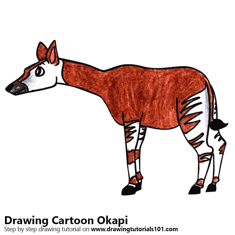 Step by step how to draw a cartoon okapi for Okapi coloring page