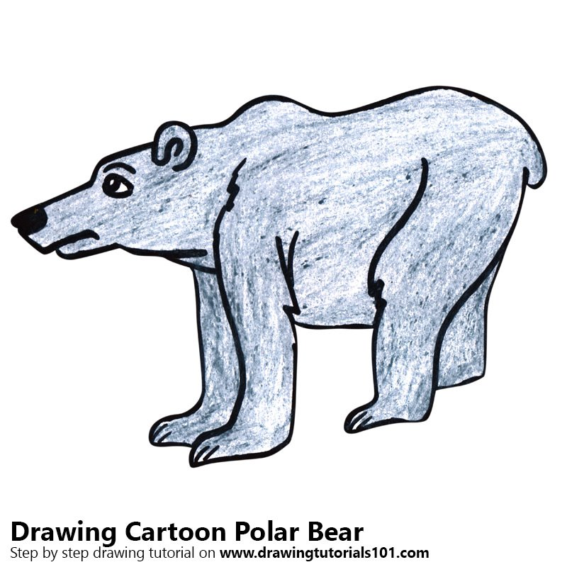 Cartoon Polar Bear Color Pencil Drawing