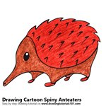 How to Draw a Cartoon Spiny Anteater