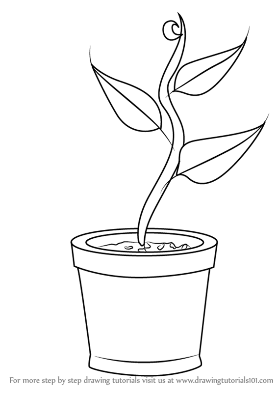 Learn How to Draw Plant in Pot (Plants for Kids) Step by ...