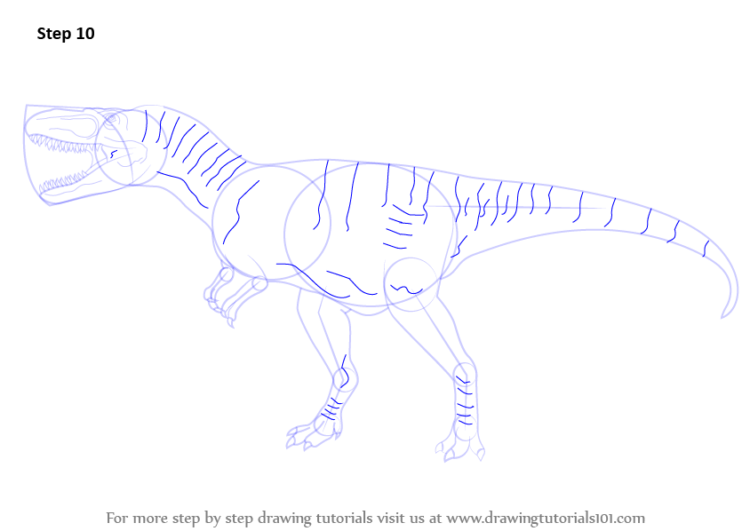 Learn How To Draw An Albertosaurus Dinosaurs Step By Step