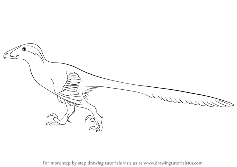 deinonychus coloring page - learn how to draw a deinonychus dinosaurs step by step