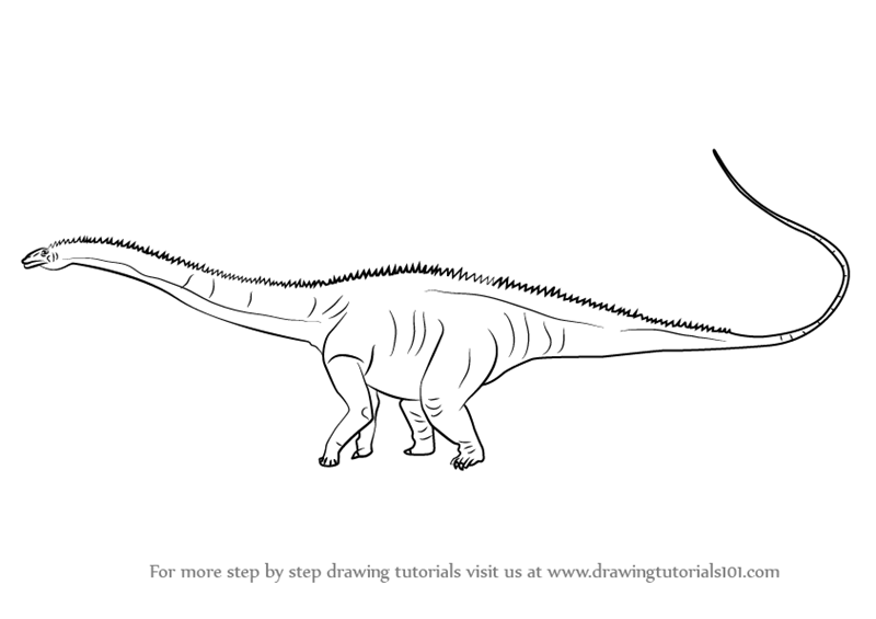 Learn how to draw a diplodocus dinosaurs step by step for Diplodocus coloring page