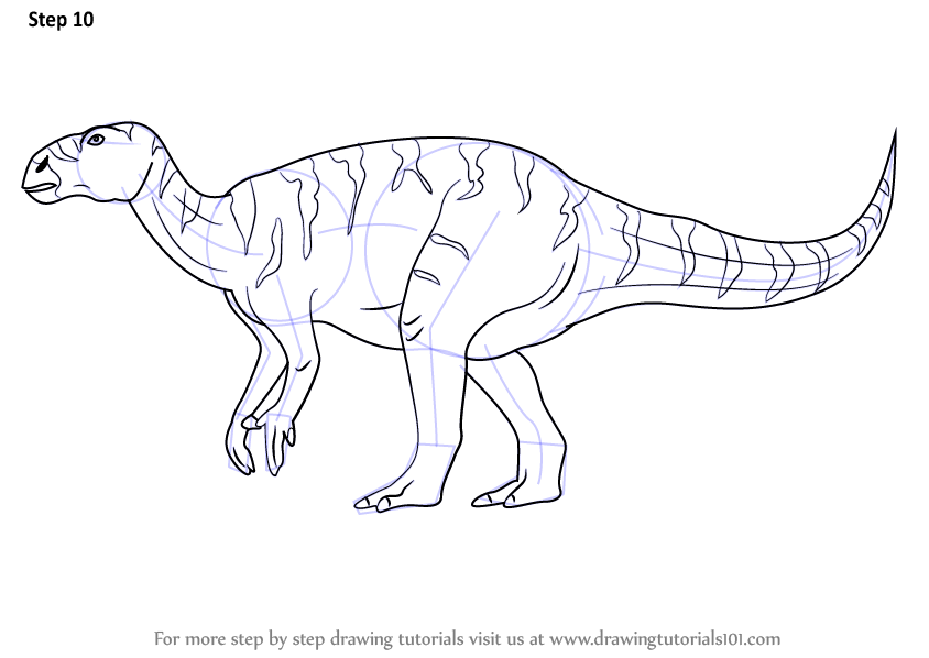 Step by Step How to Draw a Iguanodon : DrawingTutorials101.com