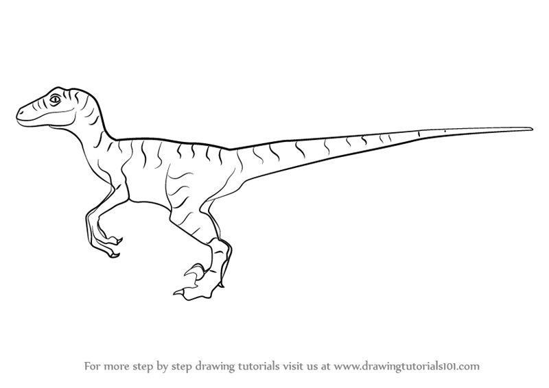 Learn How To Draw A Velociraptor Dinosaur Dinosaurs Step