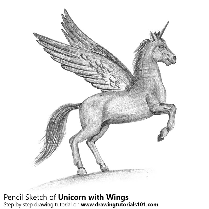 Pencil Sketch of Unicorn with Wings - Pencil Drawing