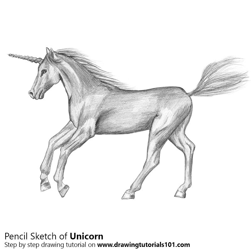 Pencil sketch of unicorn pencil drawing