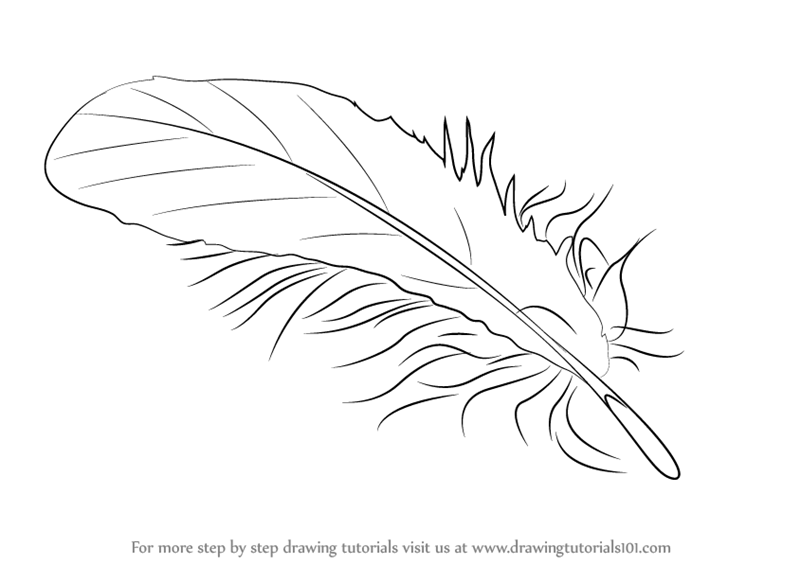 Learn How To Draw A Feather Everyday Objects Step By Drawing