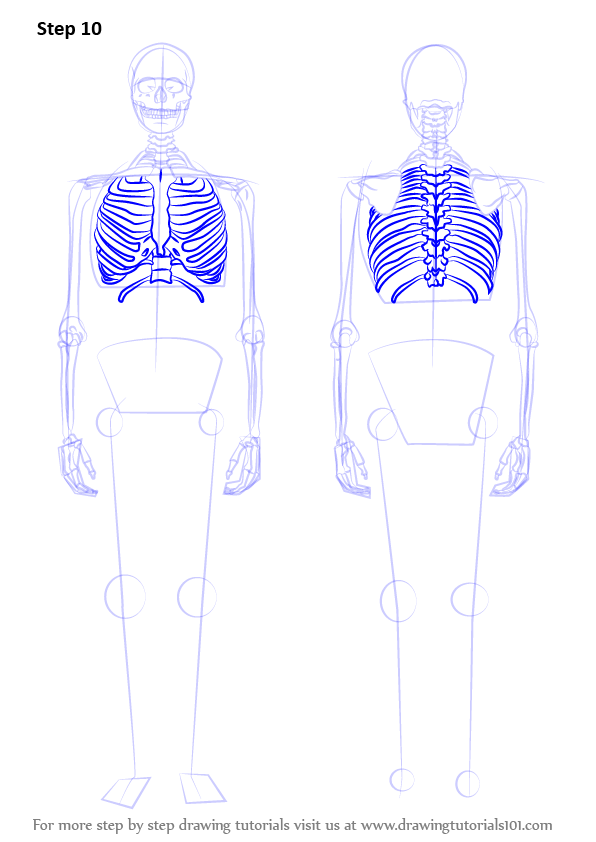 Learn How To Draw A Skeleton  Everyday Objects  Step By