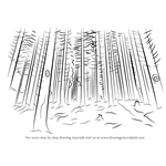 How to Draw a Forest