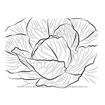 How to Draw a Cabbage
