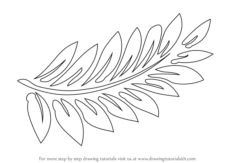 learn how to draw fern fronds plants step by step drawing tutorials