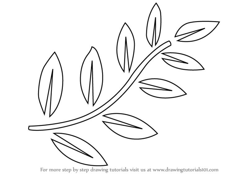 learn how to draw fern leaves plants step by step drawing tutorials