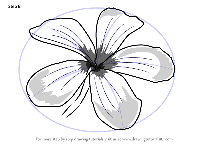 Learn How To Draw Frangipani Flower Plants Step By Step