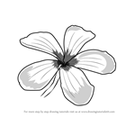 How to Draw Frangipani Flower