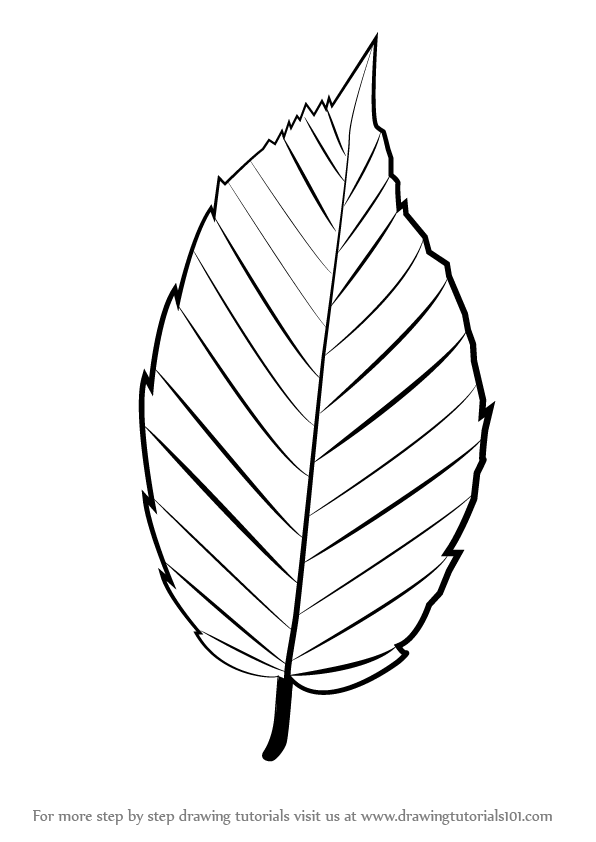 Flower Leaf Line Drawing : Learn how to draw a leaf plants step by drawing