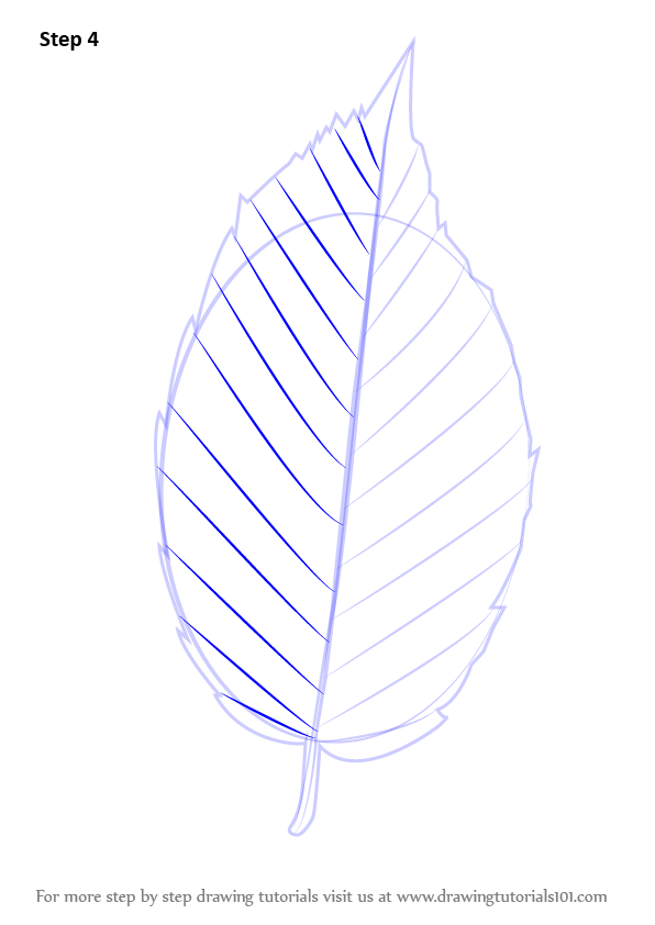 Learn How To Draw A Leaf Plants Step By Step Drawing