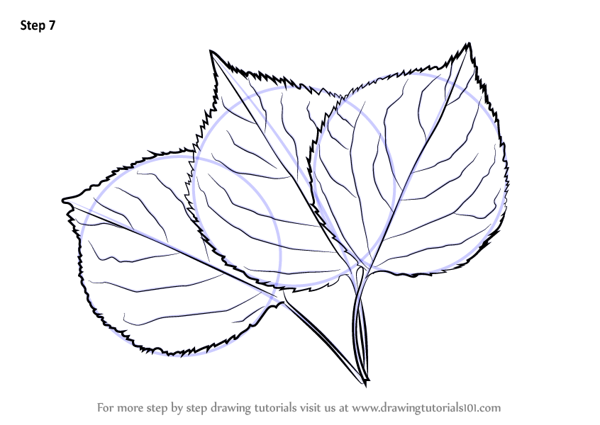 Learn How To Draw Leafs Plants Step By Step Drawing