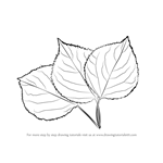 How to Draw Leafs