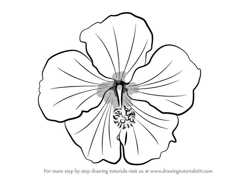 Shoe Flower Line Drawing : Learn how to draw a shoe flower plants step by