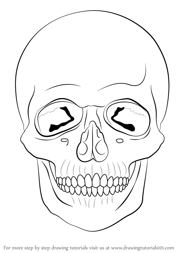 Skull Line Drawing Easy : Learn how to draw a skull skulls step by drawing