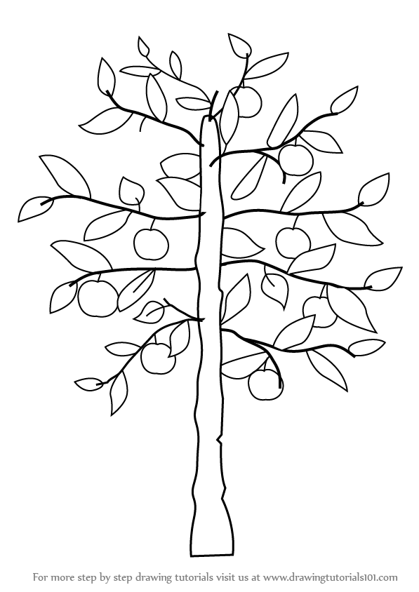 Learn how to draw an apple tree trees step by step drawing tutorials