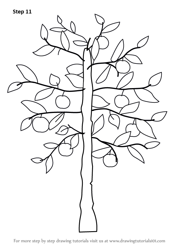 Learn How to Draw an Apple Tree (Trees) Step by Step ...