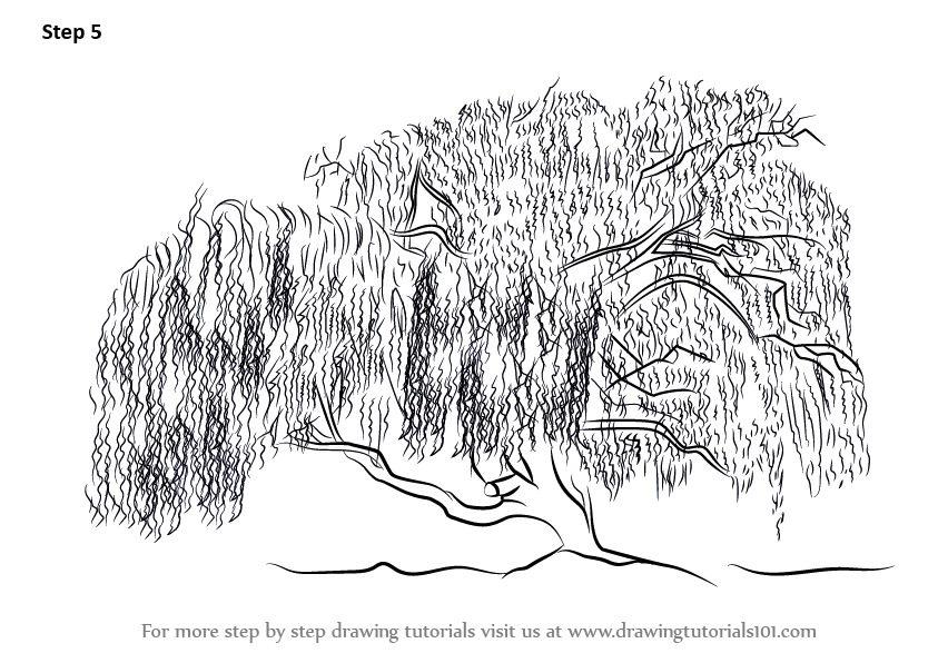 learn how to draw a willow tree trees step by step
