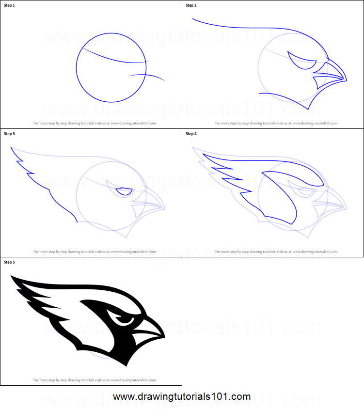 how to draw a realistic cardinal step by step
